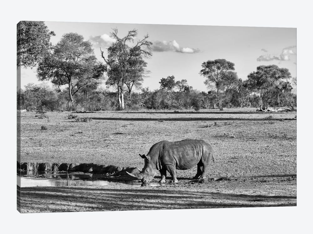 Black Rhinoceros by Philippe Hugonnard 1-piece Canvas Print