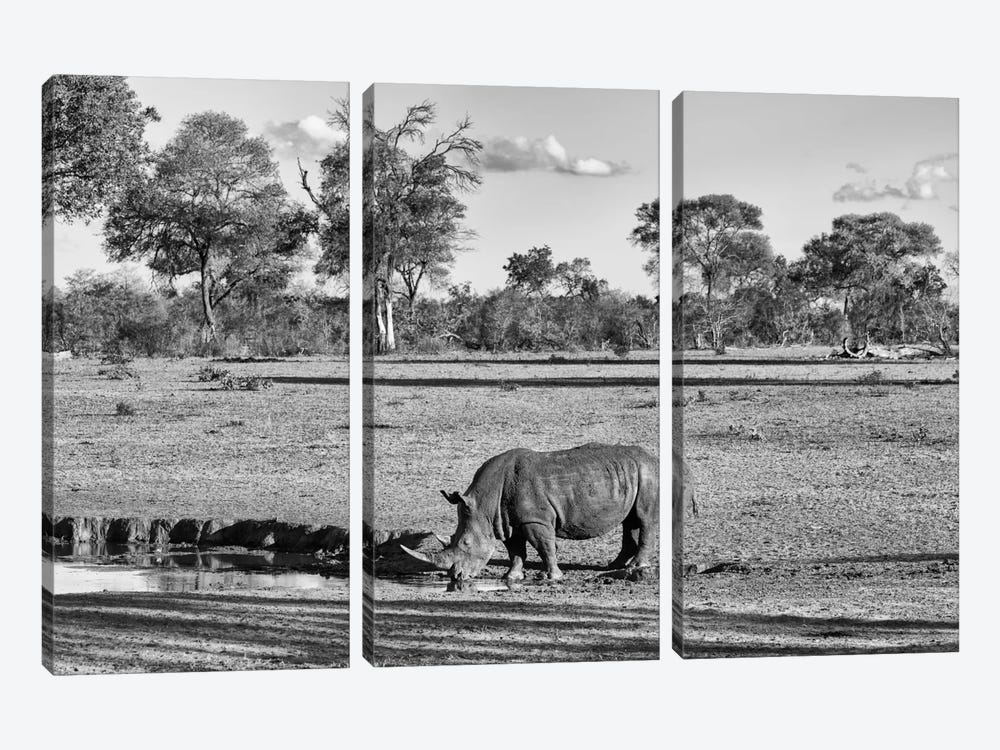 Black Rhinoceros by Philippe Hugonnard 3-piece Art Print