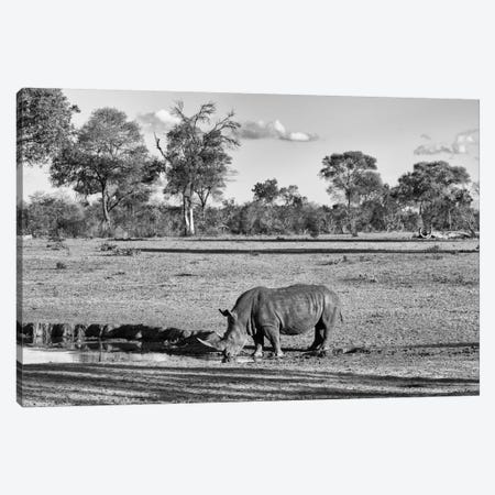 Black Rhinoceros Canvas Print #PHD186} by Philippe Hugonnard Canvas Artwork