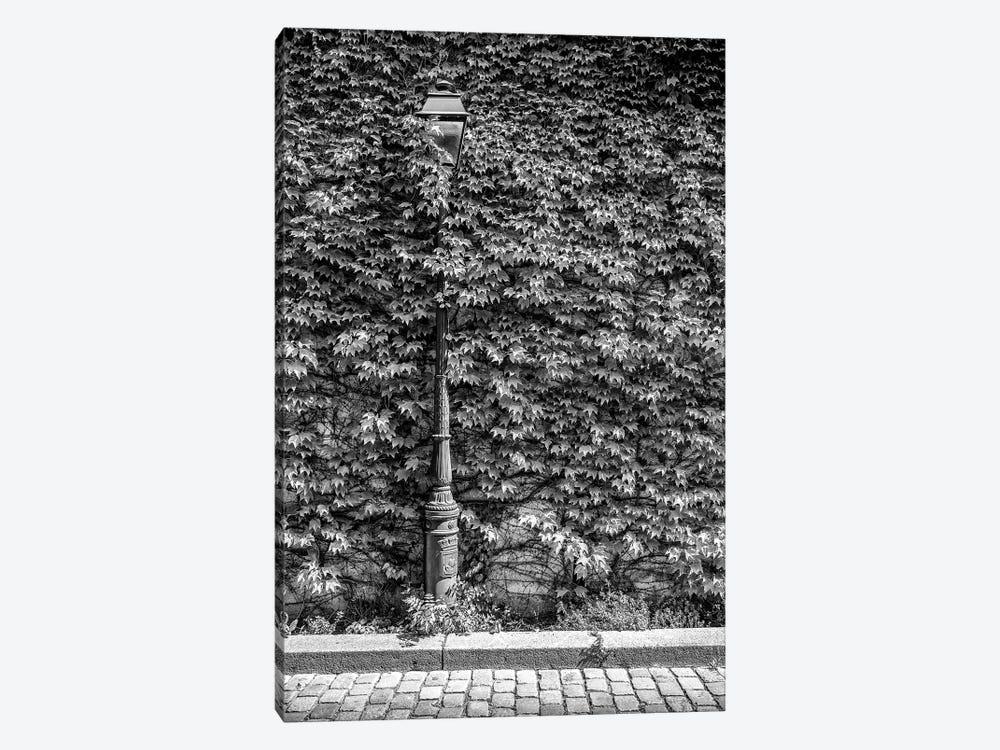 Black Montmartre Series - Hidden Between The Leaves by Philippe Hugonnard 1-piece Art Print