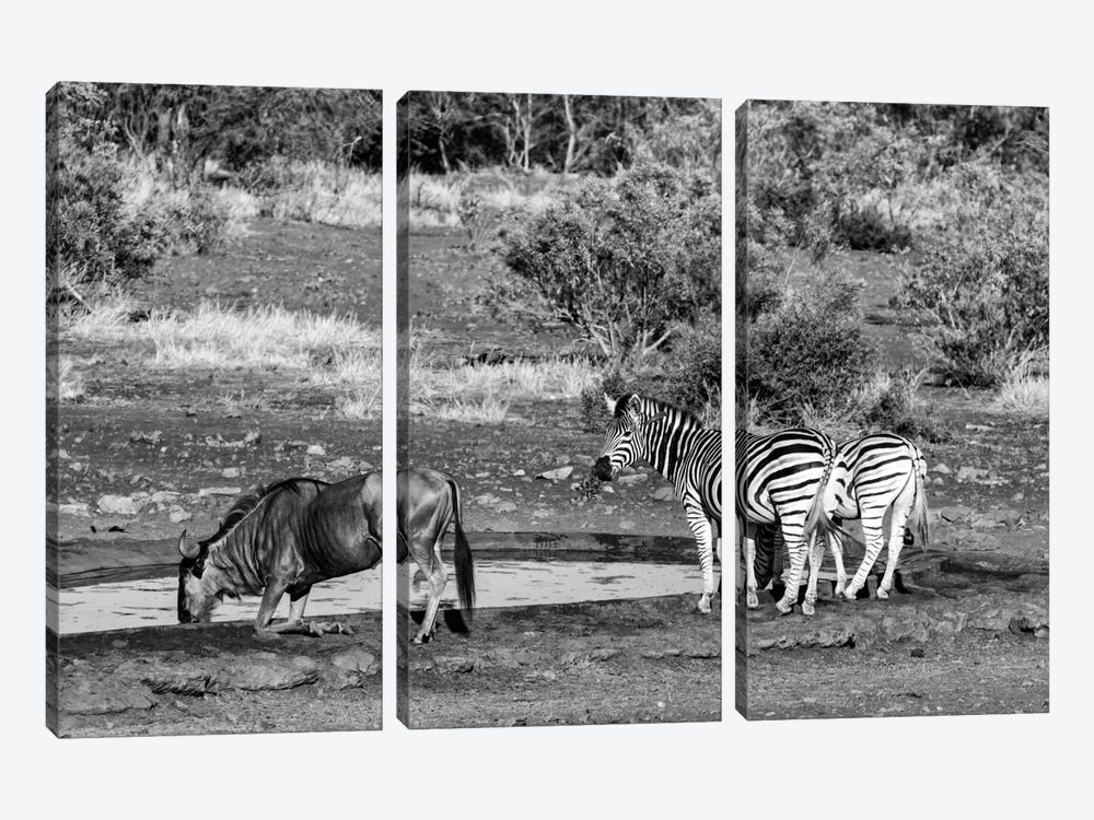 Awesome South Africa Series: Black Wildebeest and Two Zebras by Philippe Hugonnard 3-piece Canvas Artwork