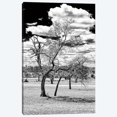 Dead Tree in the African Savannah  Canvas Print #PHD192} by Philippe Hugonnard Canvas Art