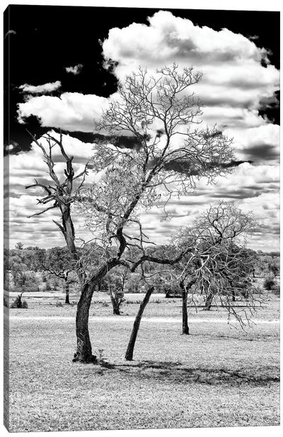 Awesome South Africa Series: Dead Tree in the African Savannah Canvas Art Print