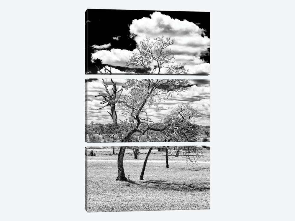Dead Tree in the African Savannah  by Philippe Hugonnard 3-piece Canvas Artwork