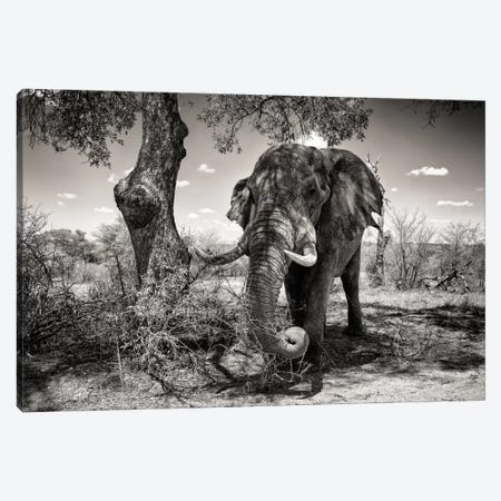Elephant   Canvas Print #PHD194} by Philippe Hugonnard Canvas Print