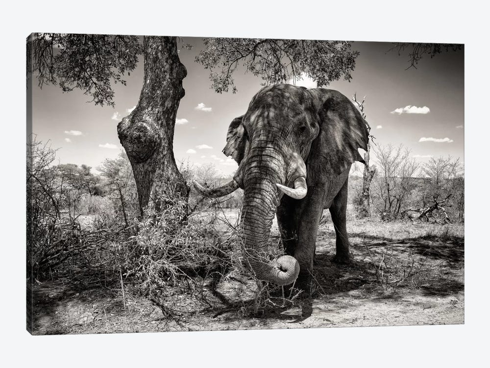 Awesome South Africa Series: Elephant 1-piece Canvas Wall Art