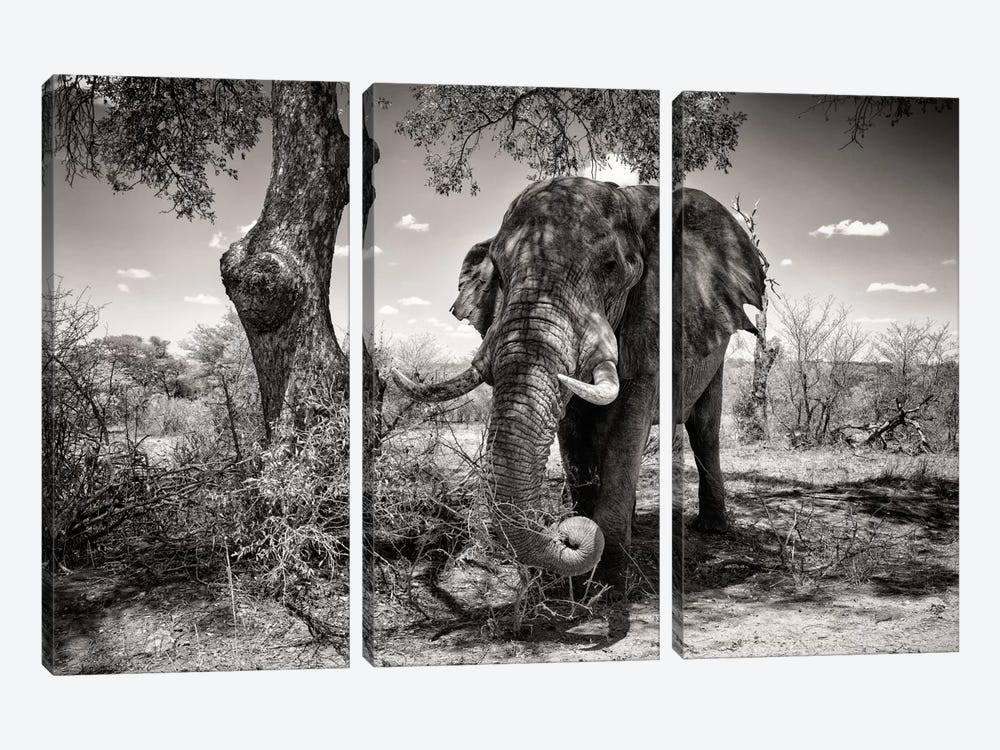 Awesome South Africa Series: Elephant 3-piece Canvas Art
