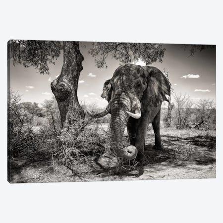 Elephant   Canvas Print #PHD194} by Philippe Hugonnard Canvas Print
