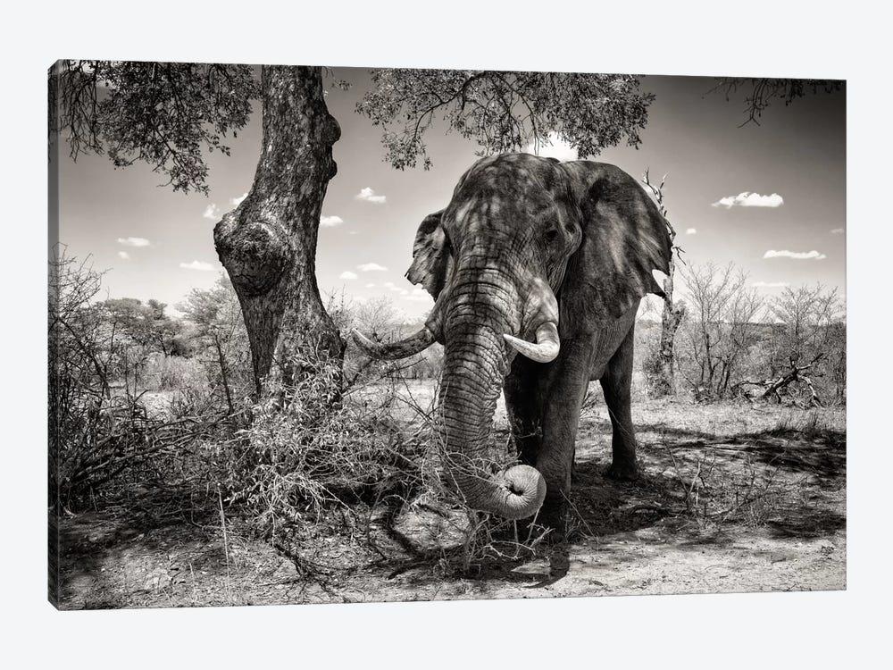 Elephant   by Philippe Hugonnard 1-piece Canvas Wall Art