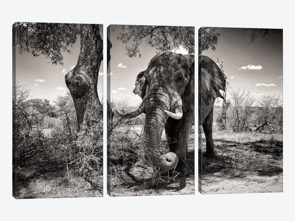 Elephant   by Philippe Hugonnard 3-piece Canvas Art