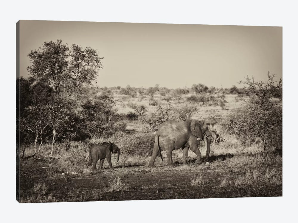 Awesome South Africa Series: Elephant and Baby by Philippe Hugonnard 1-piece Art Print