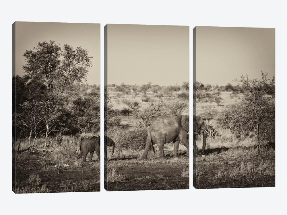 Awesome South Africa Series: Elephant and Baby by Philippe Hugonnard 3-piece Canvas Print