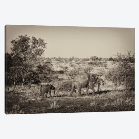Elephant and Baby Canvas Print #PHD195} by Philippe Hugonnard Canvas Art Print