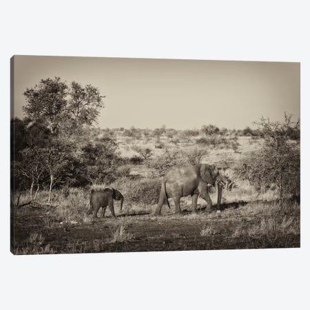 Elephant and Baby Canvas Print #PHD195} by Philippe Hugonnard Canvas Art Print