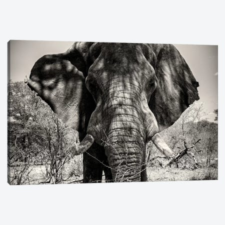 Elephant Portrait Canvas Print #PHD196} by Philippe Hugonnard Canvas Art Print