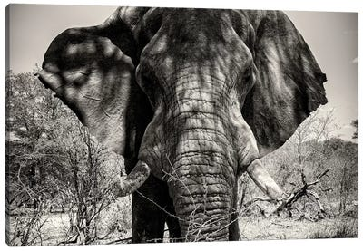 Awesome South Africa Series: Elephant Portrait Canvas Print #PHD196