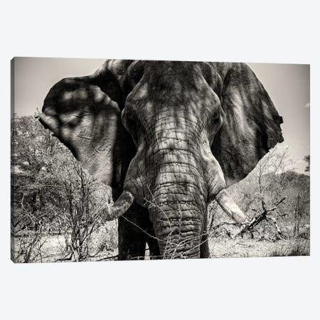 Elephant Portrait Canvas Print #PHD196} by Philippe Hugonnard Canvas Art Print