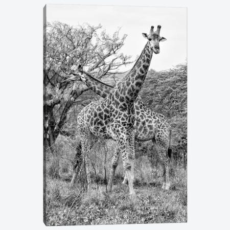 Giraffe Mother and Young  Canvas Print #PHD198} by Philippe Hugonnard Canvas Artwork