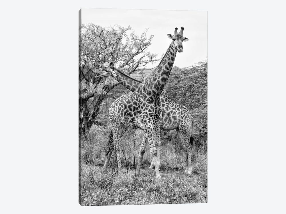 Awesome South Africa Series: Giraffe Mother and Young by Philippe Hugonnard 1-piece Canvas Wall Art