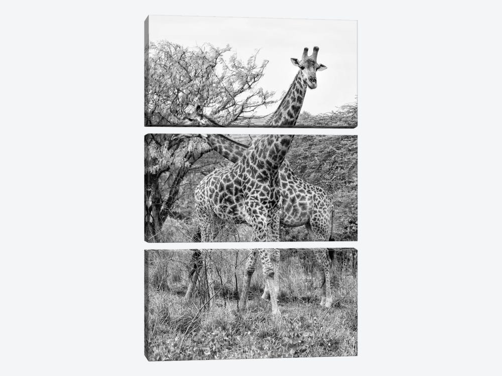 Awesome South Africa Series: Giraffe Mother and Young by Philippe Hugonnard 3-piece Canvas Wall Art