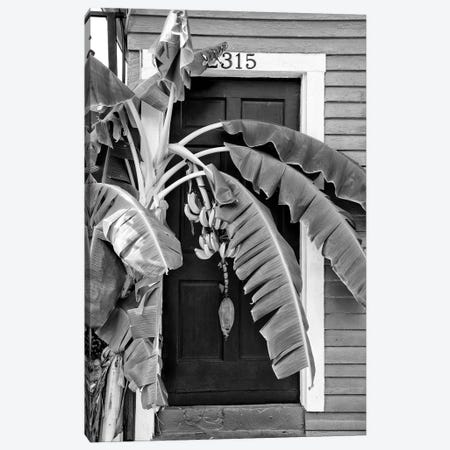 Black NOLA Series - Banana Tree Canvas Print #PHD1994} by Philippe Hugonnard Canvas Art