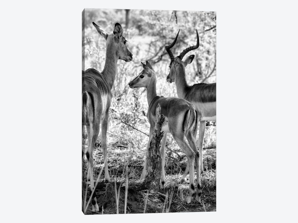 Impalas Family by Philippe Hugonnard 1-piece Art Print