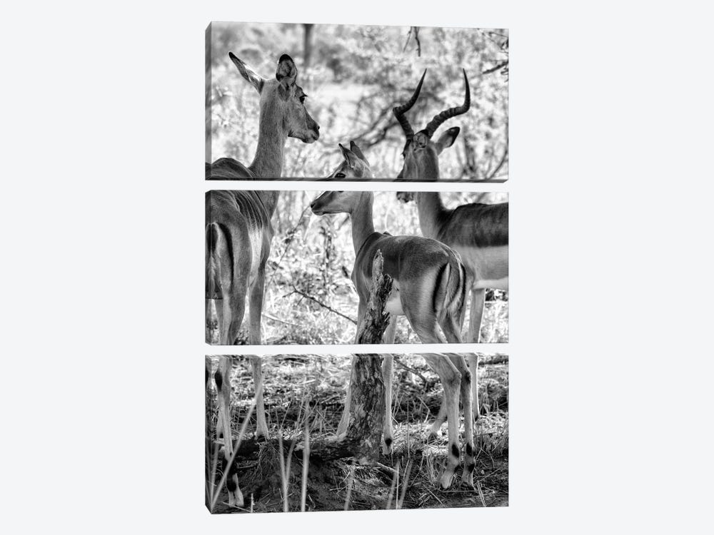 Impalas Family by Philippe Hugonnard 3-piece Canvas Print