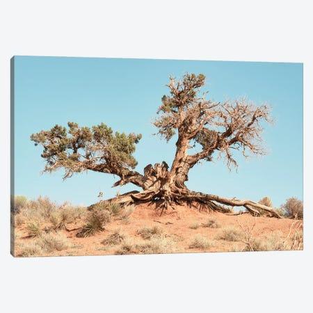 American West - Desert Tree Canvas Print #PHD2046} by Philippe Hugonnard Canvas Wall Art