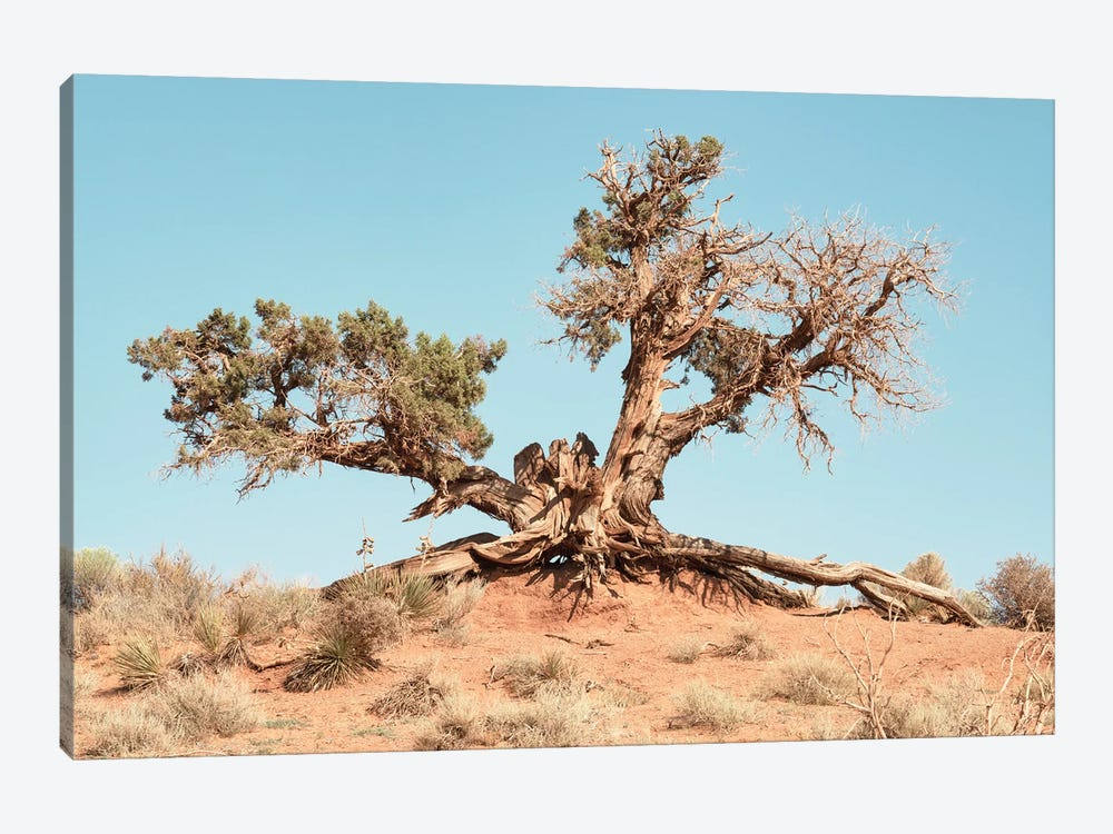 American West - Desert Tree by Philippe Hugonnard 1-piece Canvas Wall Art