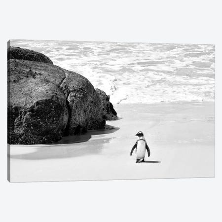 Penguin at Boulders Beach  Canvas Print #PHD204} by Philippe Hugonnard Canvas Print