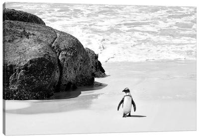 Awesome South Africa Series: Penguin at Boulders Beach  Canvas Print #PHD204