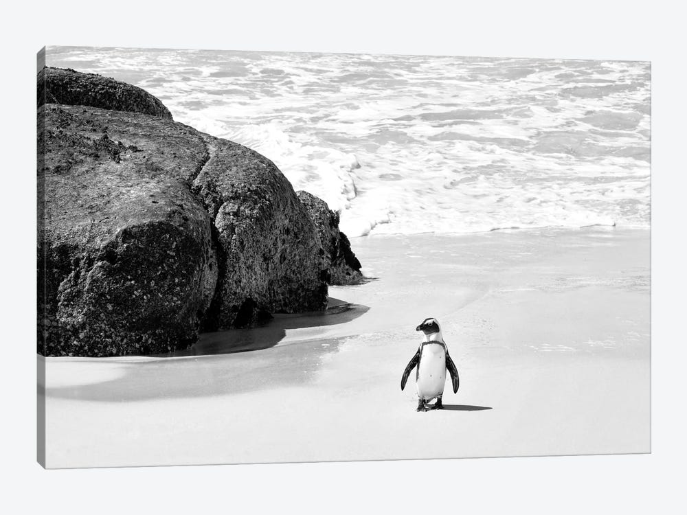 Penguin at Boulders Beach  by Philippe Hugonnard 1-piece Canvas Art Print