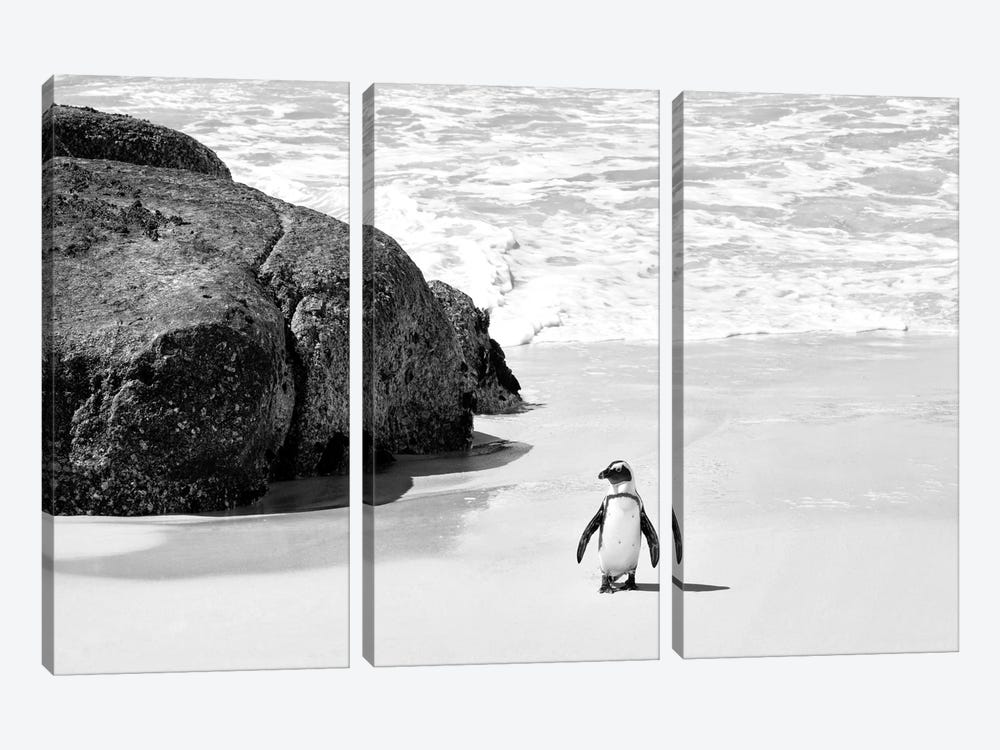 Penguin at Boulders Beach  by Philippe Hugonnard 3-piece Canvas Print