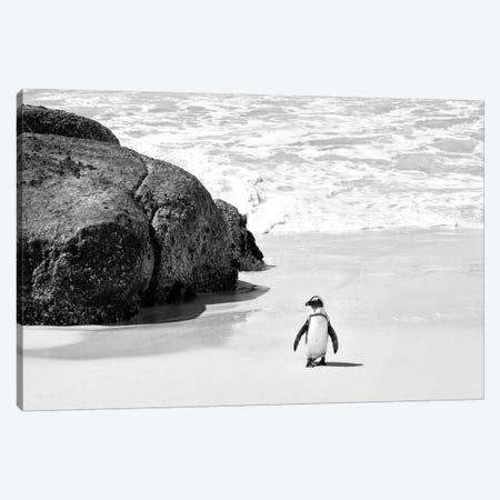 Penguin at Boulders Beach  Canvas Print #PHD204} by Philippe Hugonnard Canvas Print