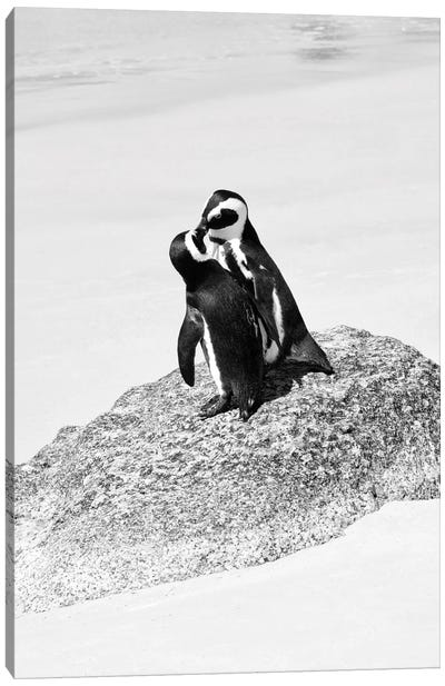 Awesome South Africa Series: Penguin Lovers Canvas Print #PHD205