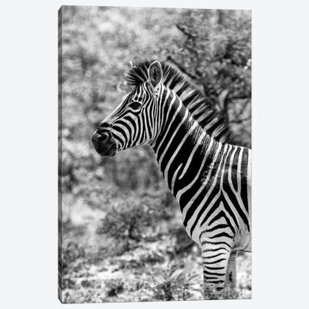 Portrait of Burchell's Zebra Canvas Print #PHD207} by Philippe Hugonnard Art Print