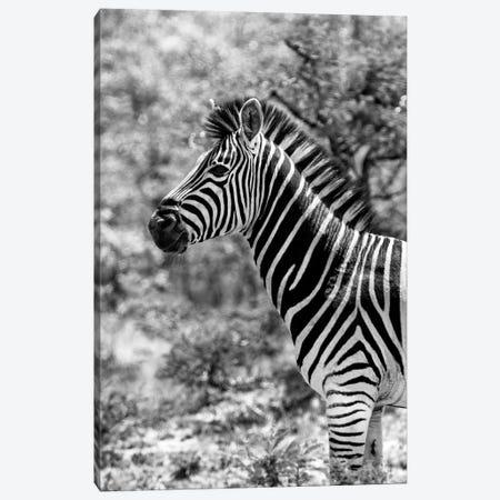 Portrait of Burchell's Zebra 3-Piece Canvas #PHD207} by Philippe Hugonnard Art Print