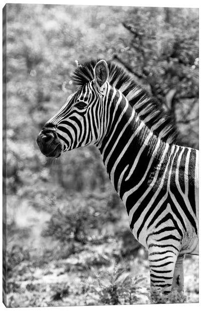 Portrait of Burchell's Zebra Canvas Art Print