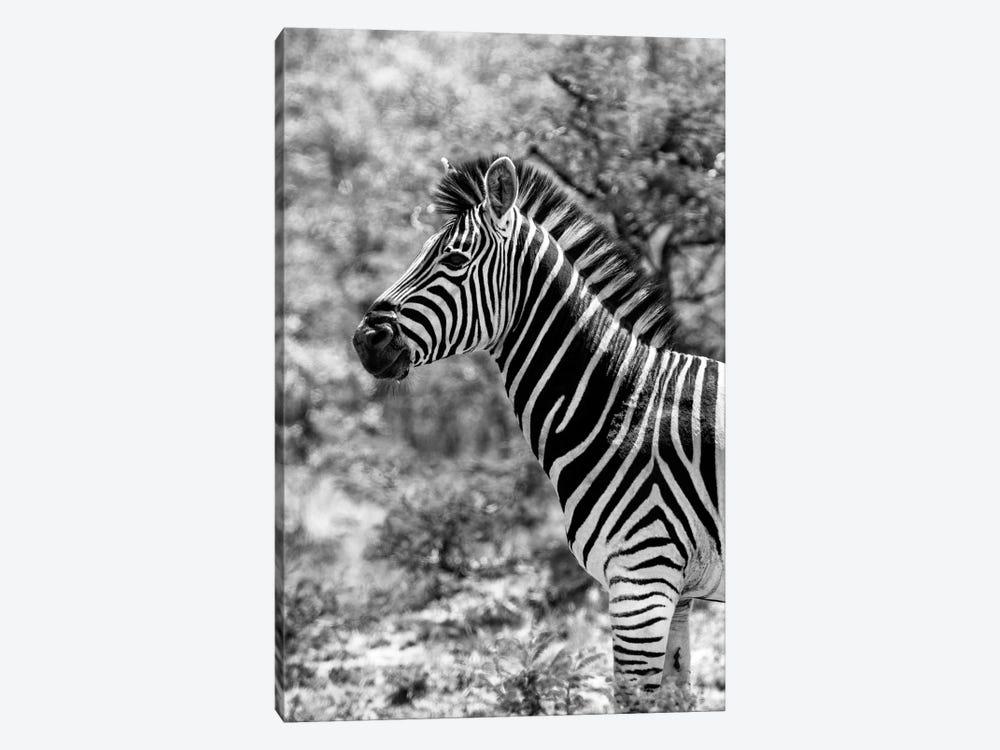 Portrait of Burchell's Zebra by Philippe Hugonnard 1-piece Canvas Art