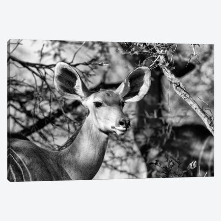 Portrait of Nyala Antelope 3-Piece Canvas #PHD209} by Philippe Hugonnard Canvas Wall Art