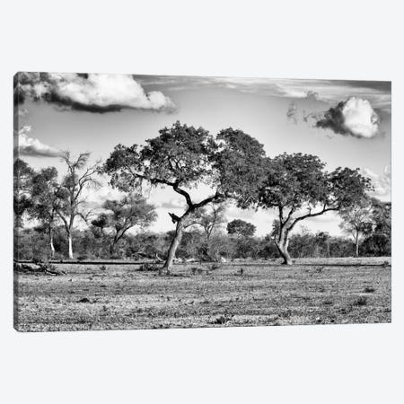 Savanna Trees Canvas Print #PHD210} by Philippe Hugonnard Canvas Print