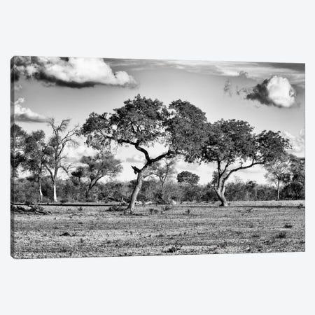 Savanna Trees Canvas Print #PHD210} by Philippe Hugonnard Canvas Print