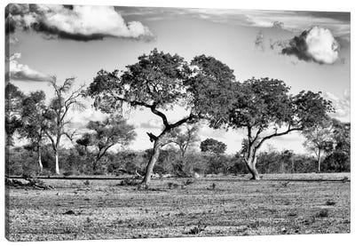 Savanna Trees Canvas Art Print