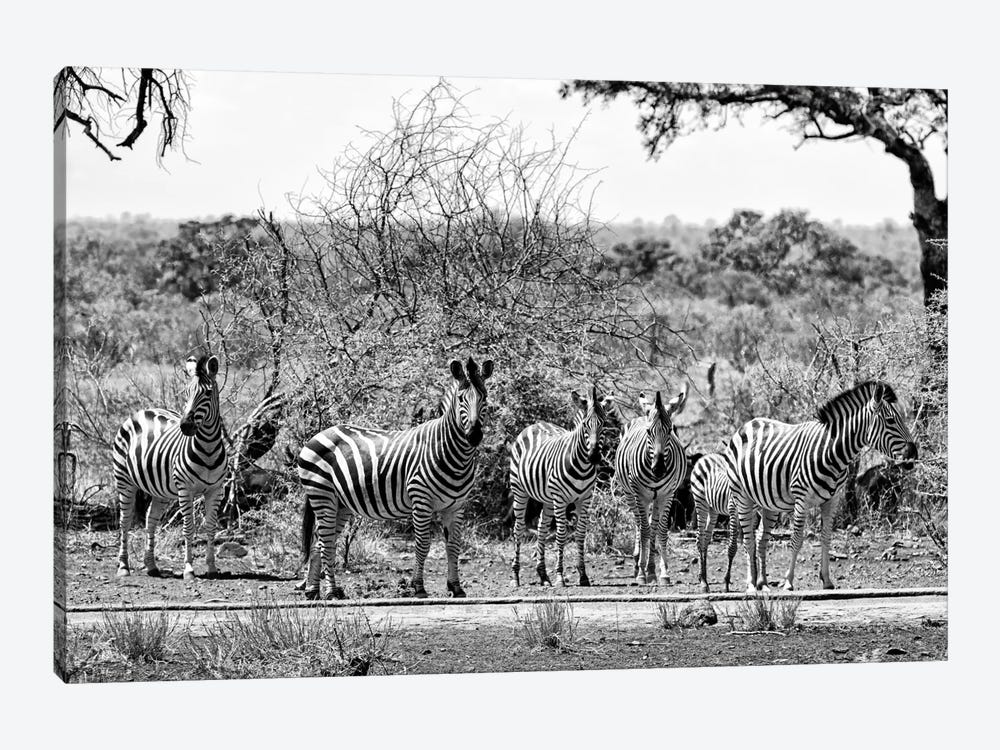 Awesome South Africa Series: Six Zebras on Savanna by Philippe Hugonnard 1-piece Canvas Wall Art