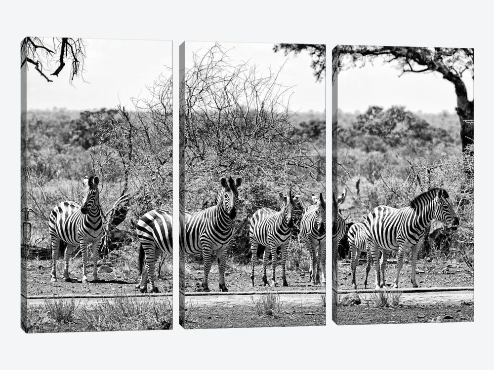 Awesome South Africa Series: Six Zebras on Savanna 3-piece Canvas Wall Art
