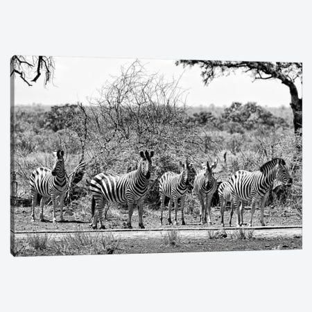 Six Zebras on Savanna Canvas Print #PHD212} by Philippe Hugonnard Art Print