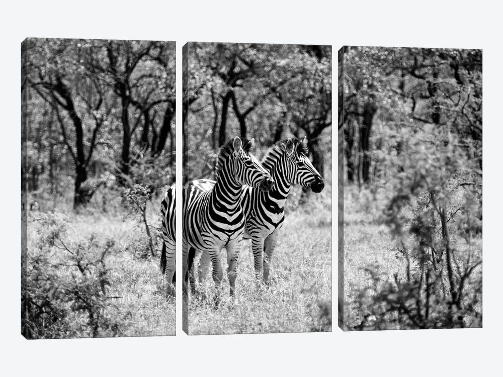 Two Zebras by Philippe Hugonnard 3-piece Art Print