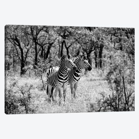 Two Zebras Canvas Print #PHD215} by Philippe Hugonnard Canvas Wall Art