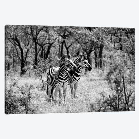 Two Zebras Canvas Print #PHD215} by Philippe Hugonnard Canvas Wall Art