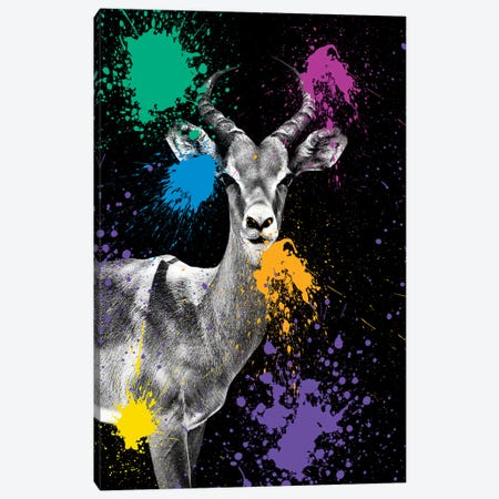 Antelope Impala Canvas Print #PHD217} by Philippe Hugonnard Canvas Art